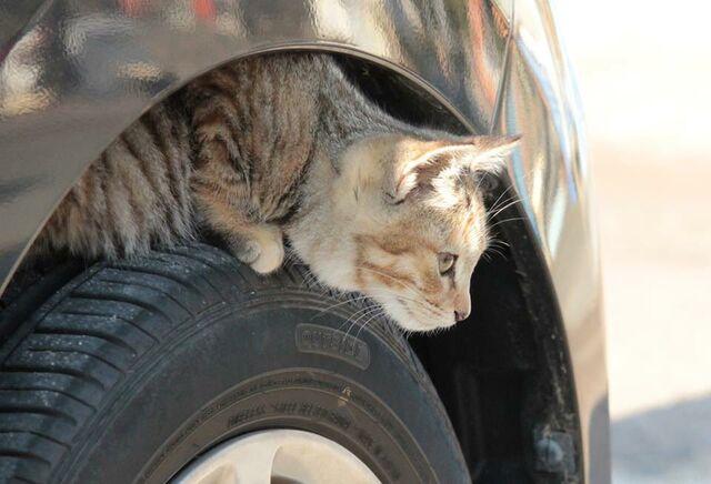 #猫バンバン 乗車前の「ちょっとした思いやり」で救える命があります 日産自動車が呼びかけ - Togetterまとめ
